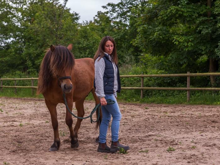 Heste responderer oprigtigt og direkte på de følelser mennesket møder den med. Skolen for rideterapi.