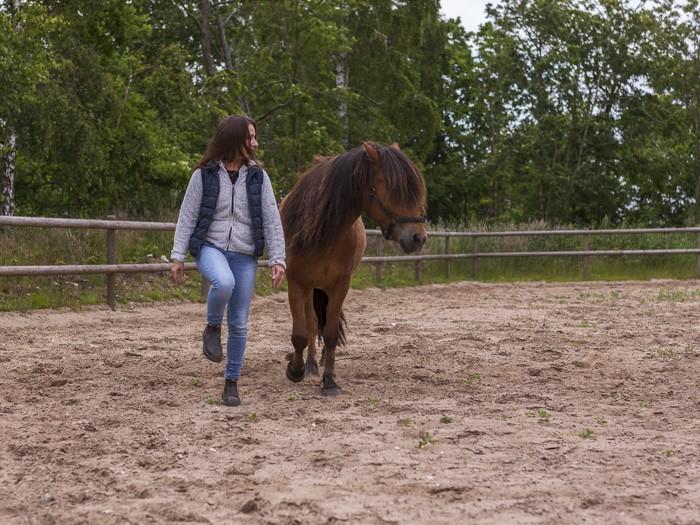 Heste responderer oprigtigt og direkte på det kropssprog mennesket møder den med. Skolen for rideterapi.