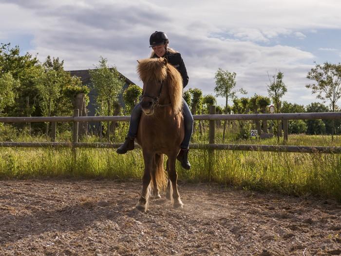 Vi vil gerne tilbyde nogle kortere kurser end vores rideterapeut uddannelse, der rummer centrale elementer i vores koncept med heste og natur.