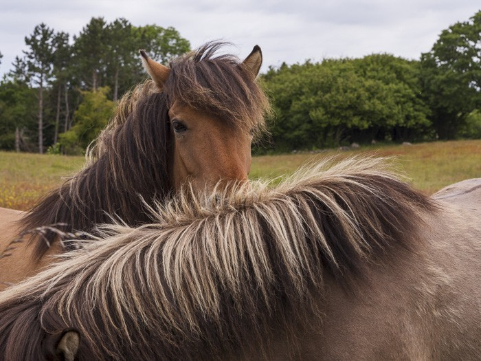 Hesten hjælper os med at være nærværende, til stede i den helt store sammenhæng ved rideterapi