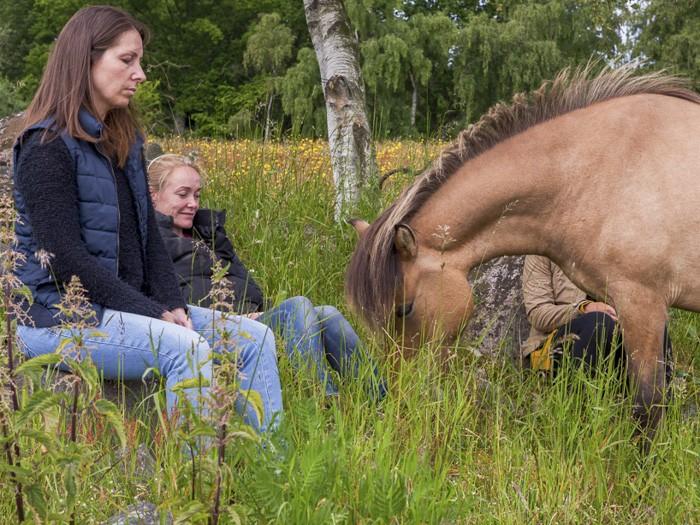 Samværet med hesten giver os mulighed for Mindfulness og dermed forening med os selv på et dybere plan, og med vores omgivelser