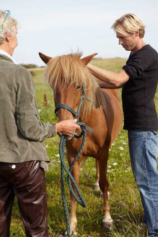 Praktisk arbejde med hesten - horsemanship