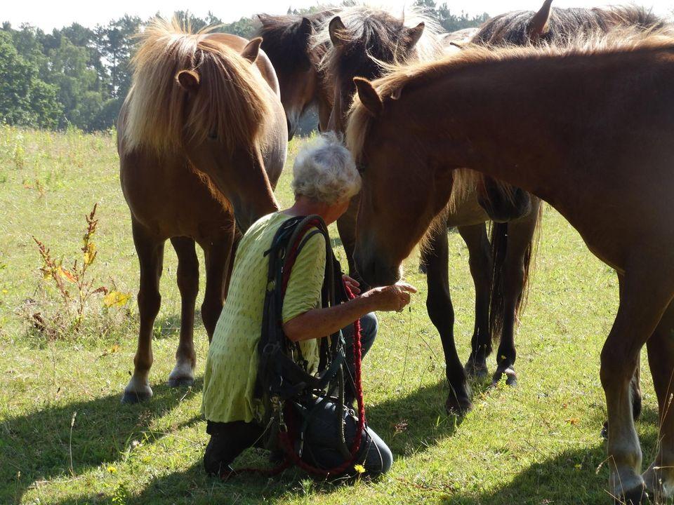 Hesten responderer oprigtigt og direkte på det kropssprog og følelser, mennesket møder den med. Skolen for rideterapi.