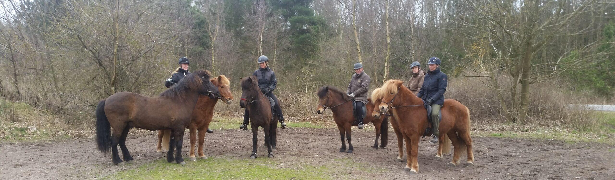 Rideterapeut elever i foråret på Røsnæs
