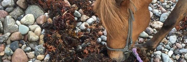 kontakten til hesten, naturen samt vores klienter, bliver meget bedre, mere nærværende, når vi oplever mere med sanserne.