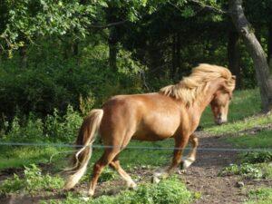 Rideterapeuten skal prøve at fremvise hestens glæde ved at bruge sig