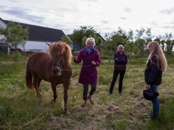 Praktikanten deltager på lige fod med rideterapeuten