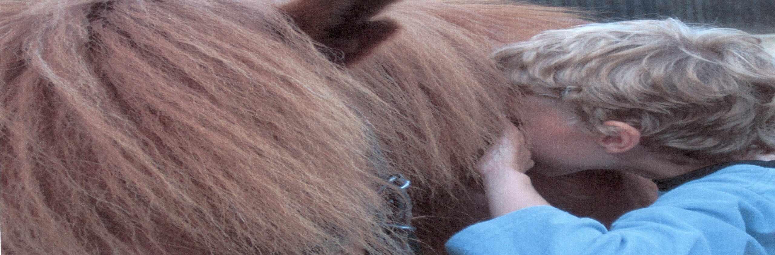 Mulighed for praktik hos Skolen for Rideterapi. Blind dreng og hest.